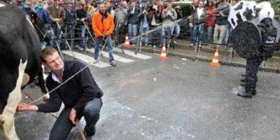 3. Contra desplome del precio de la leche. Agricultores lanzaban chorros directo de las ubres de vacas hacia policías. Foto:Getty Images