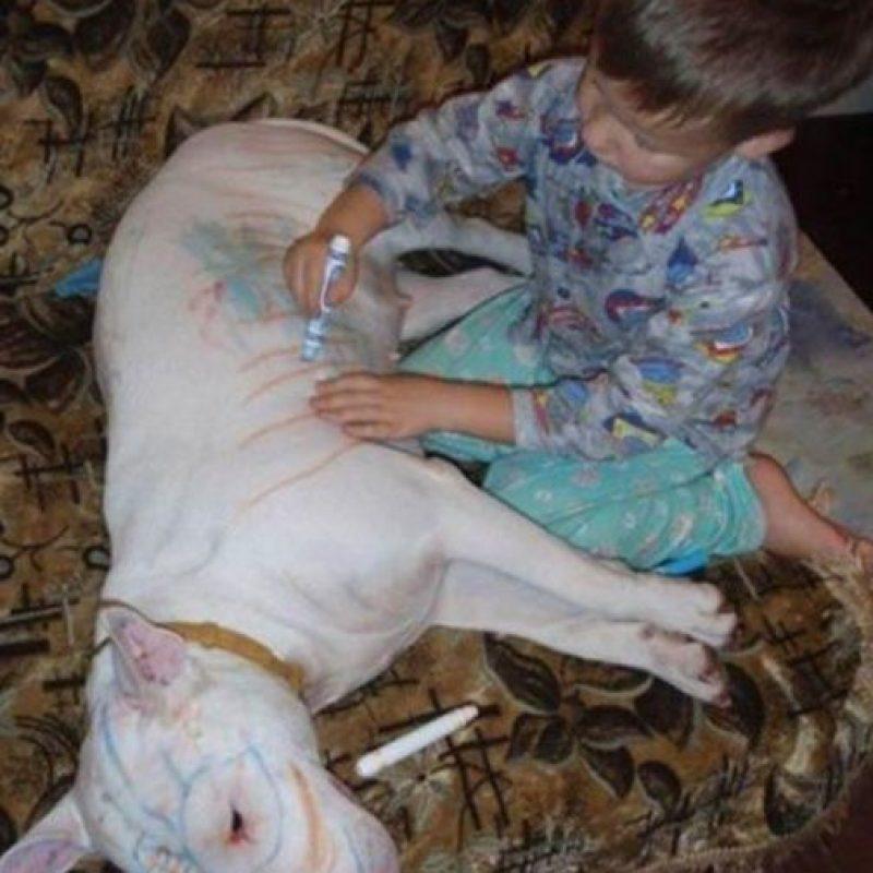 """""""Te marcaré con mi signo, perro"""" Foto:Oddee"""