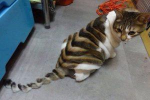 ¿Quién le hizo esto a este pobre gato? Foto:Imgur