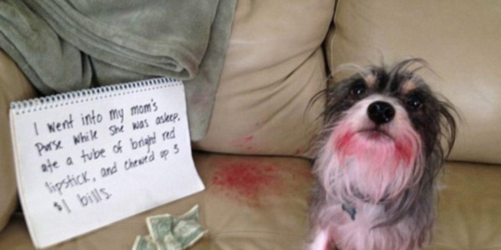 """""""Fuí al bolso de mamá y me comí su pintalabios"""" Foto:DogShaming/Tumblr"""