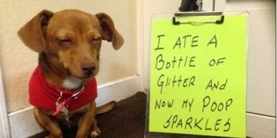"""""""Me comí una botella de escarcha y ahora hago popó brillante"""" Foto:DogShaming/Tumblr"""