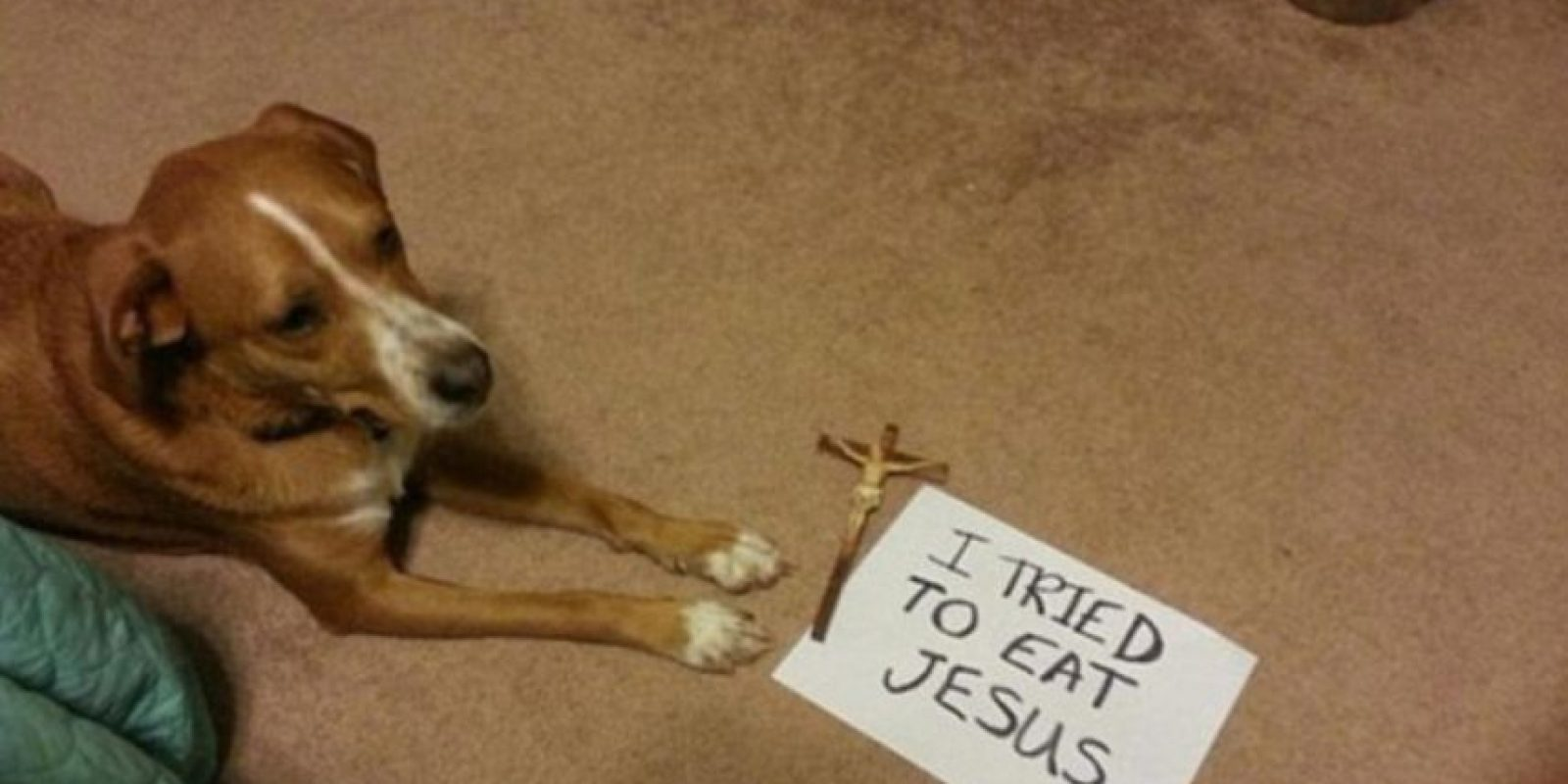 """Me traté de comer a Jesús"" Foto:DogShaming/Tumblr"