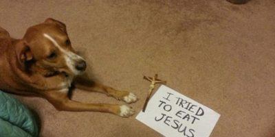 FOTOS: 20 perros que fueron