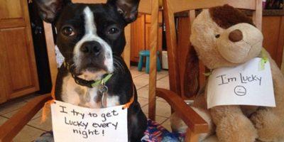 """Trato de tener a Lucky cada noche"". Al lado del perro: ""Yo soy Lucky"" Foto:DogShaming/Tumblr"