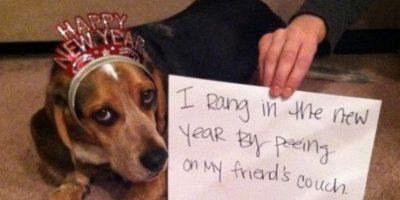 """""""Empecé el Año Nuevo orinándome en el sofá de mi amigo"""" Foto:DogShaming/Tumblr"""