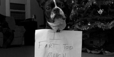 """Me tiro muchos pedos"" Foto:DogShaming/Tumblr"