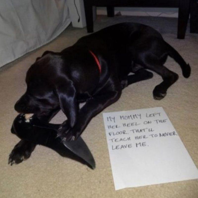 """""""Me como esto para que mi mami no me deje solo"""" Foto:DogShaming/Tumblr"""
