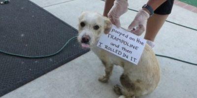 """""""Me hice popó en el trampolín y luego me subí a él"""" Foto:DogShaming/Tumblr"""