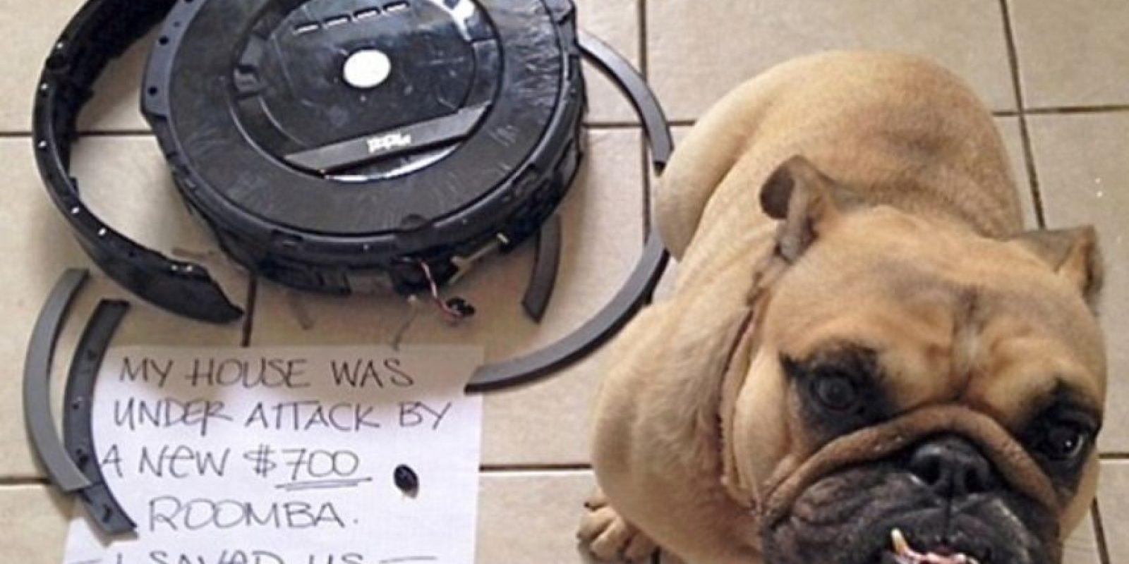 """""""Mi casa estaba bajo ataque por esta aspiradora. Por eso los salvé a todos"""" Foto:DogShaming/Tumblr"""
