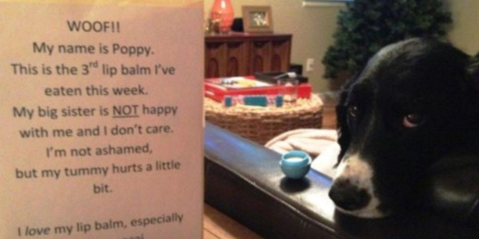 """""""Mi hermana no me quiere porque me he comido 3 brillos de ella"""". Foto:DogShaming/Tumblr"""