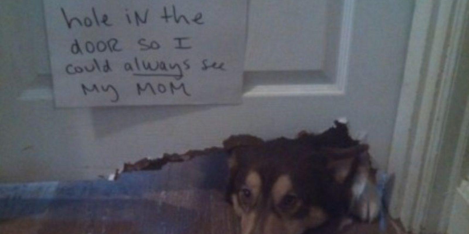 """Me comí la puerta"" Foto:DogShaming/Tumblr"