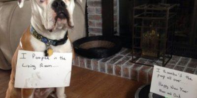 """Me hice popó en la sala"" Foto:DogShaming/Tumblr"