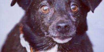 FOTOS: Vean cómo cambian 9 perritos antes y después de ser adoptados