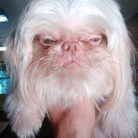 """Esta sería su versión """"perro"""" Foto:GosipPix"""