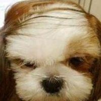 El mismo rostro enfurruñado. Foto:GosipPix