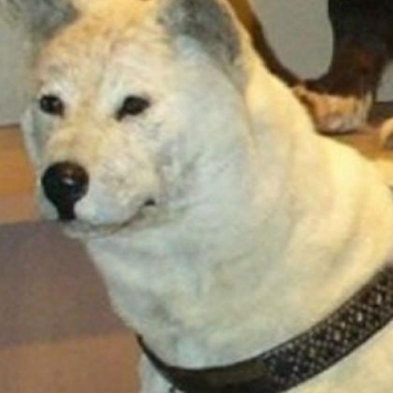 """Esta sería su transformación """"canina"""". Foto:GosipPix"""
