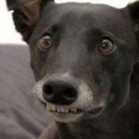 """Así se vería """"en perro"""". Foto:GosipPix"""