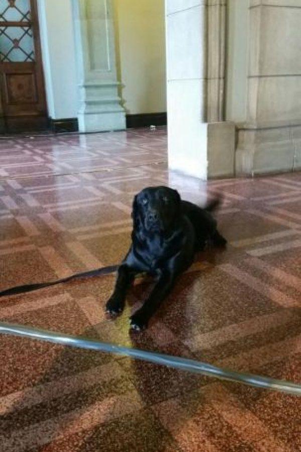 """""""Yoshi"""" también formó parte del equipo de seguridad. Foto:Publinews"""