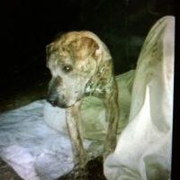 Tisha al momento de ser rescatada Foto:Facebook