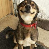 ¡Hermoso! Foto:Tumblr.com/tagged-funy-pets
