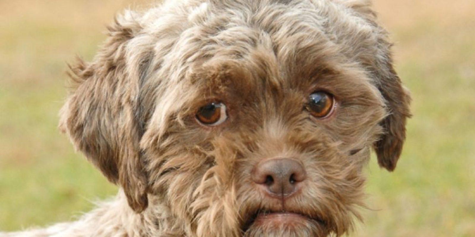 ¡Humano! Foto:Schnauzi.com