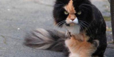 Un poquito enojado… Foto:Tumblr.com/tagged-funy-pets