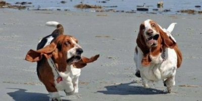 Foto:Tumblr.com/tagged-funy-pets