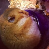 Él prefiere dormir antes de sacar sus reservas Foto:Twitter