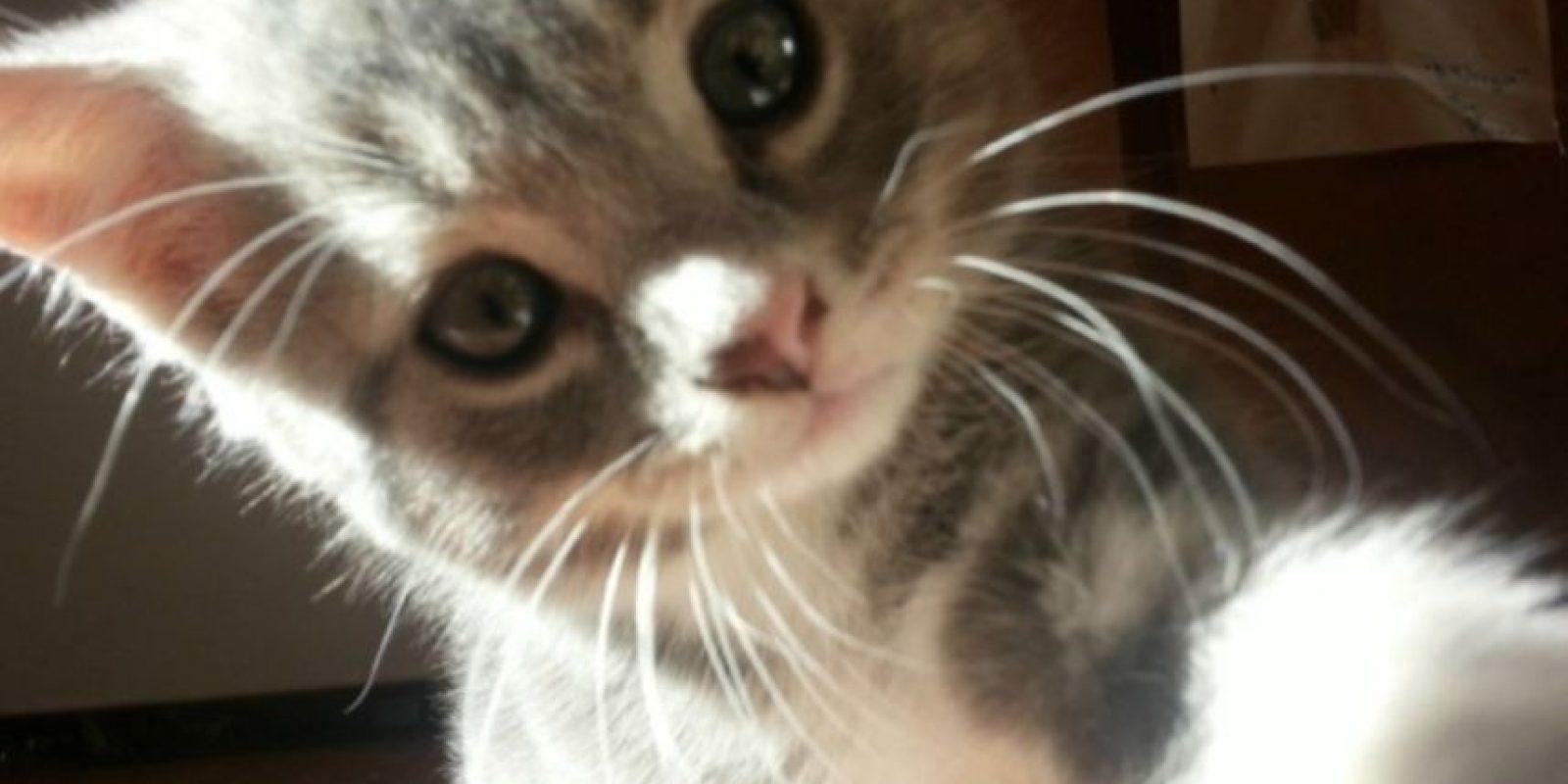 ¿Miau? Foto:Imgur