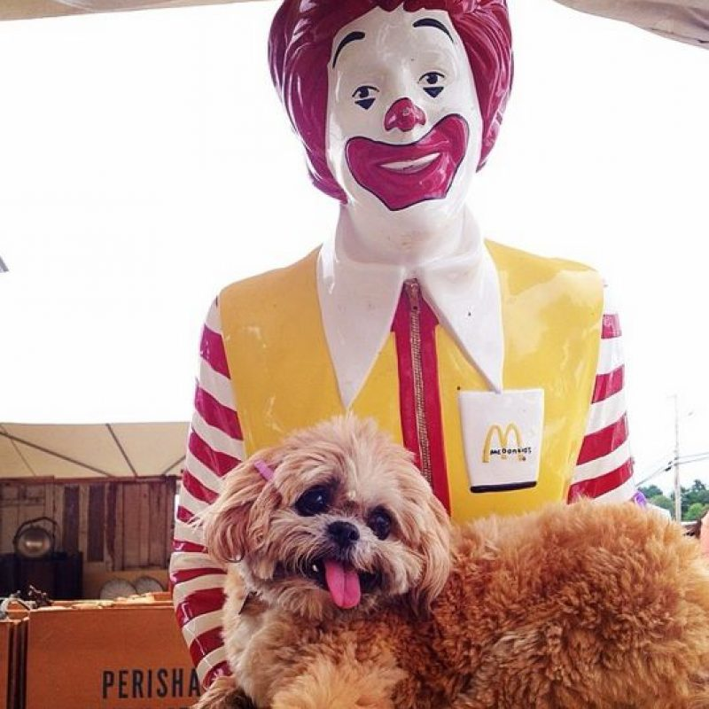 Ronald McDonald Foto:Instagram @marniethedog