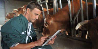 Analizan la creación de un viceministerio de Ganadería para evitar contrabando de ganado
