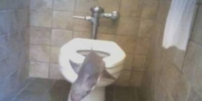 Este tiburón fue encontrado en un parque acuático de Carolina del Sur. Ya estaba muerto. Foto:Imgur