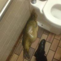 Este pescadote fue hallado en un restaurante famoso de comida rápida. Foto:Reddit