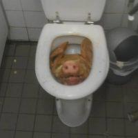 Esta cabeza de lechón fue hallada en un club de Amsterdam Foto:Pikdit