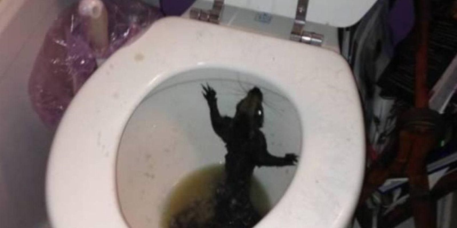 No es una rata, pero lo parece. Es una ardilla hallada en Winnipeg Foto:Twitter