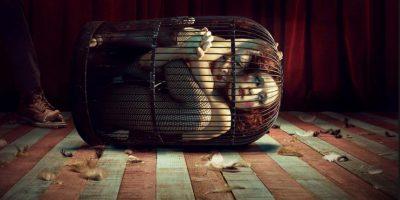 Foto:FX