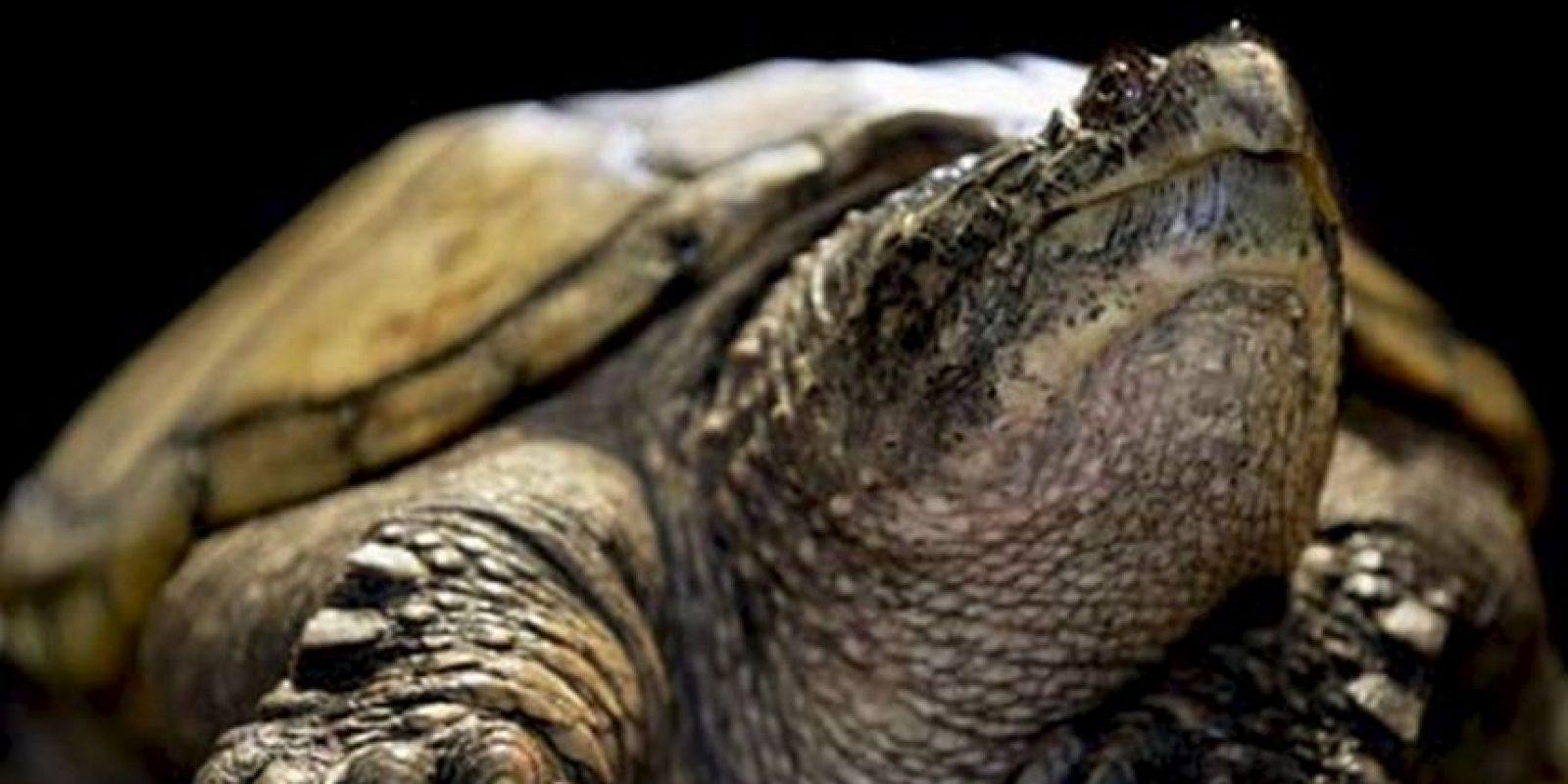 El escritor griego Esquilo fue aplastado por una tortuga que cayó del cielo. Le profetizaron que moriría al caerle una casa encima. Foto:Getty Images