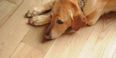 El perro asesino: En 1988, una familia dejó a su perro al cuidado de un vecino, que lo dejó irse al balcón. Este cayó sobre una mujer de 75 años, matándola al instante. Otra mujer fue a pedir ayuda y fue atropellada. Y un anciano, al ver el espectáculo, falleció de un paro cardiaco. Foto:Getty Images