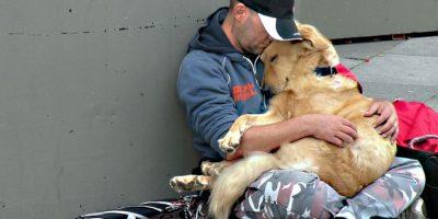 FOTOS. 20 razones por las que un perro es indispensable