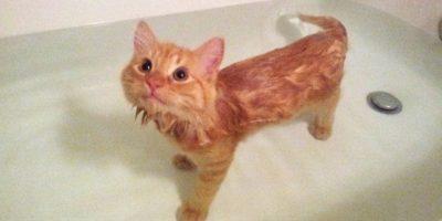FOTOS. A estos tiernos gatos les encanta el agua