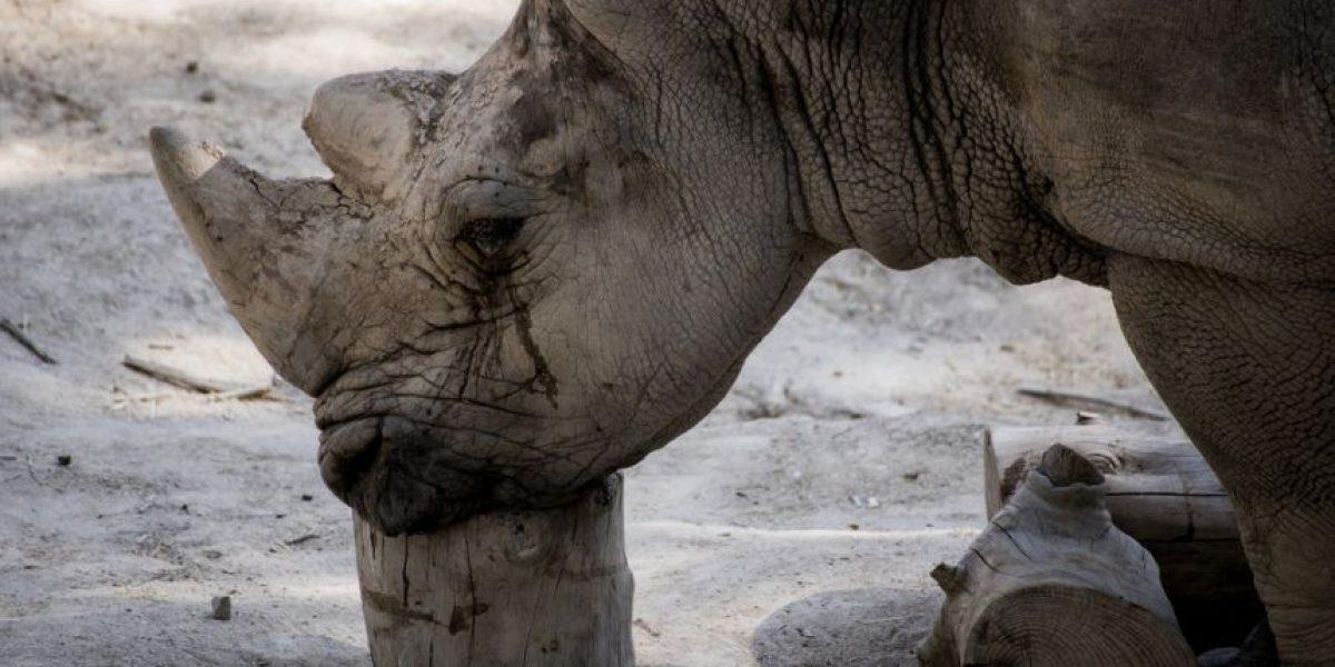 FOTOS. Las desgarradoras imágenes del sufrimiento de los animales en zoológicos españoles