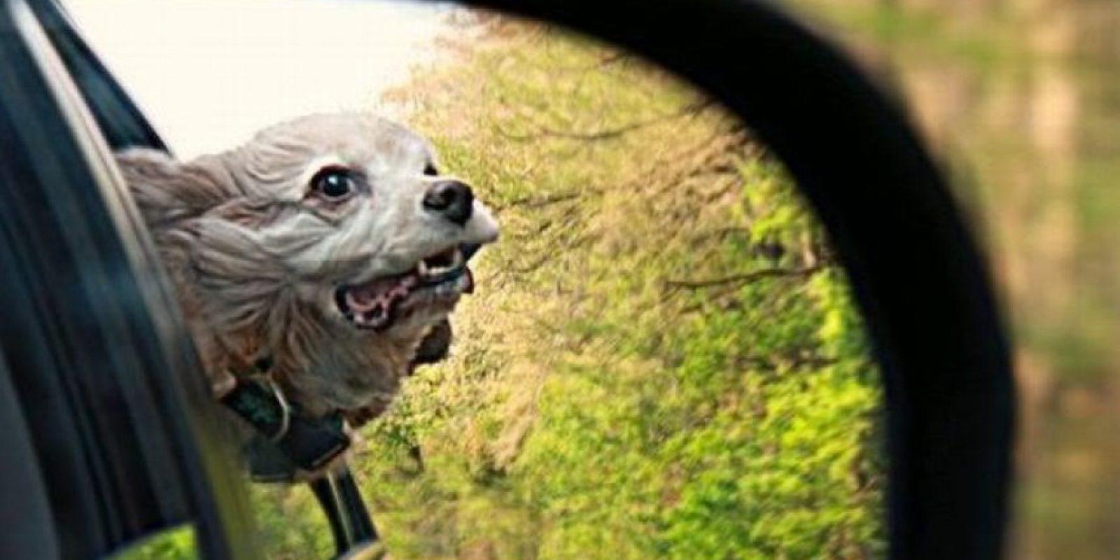 Foto:Dogguie