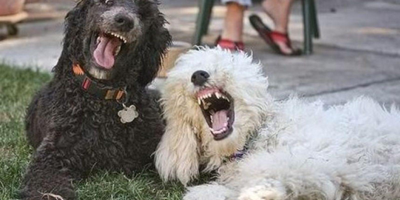 Las personas que tienen más apego a sus mascotas tienen niveles más altos de neuroticismo. Foto:Perros.facilisimo