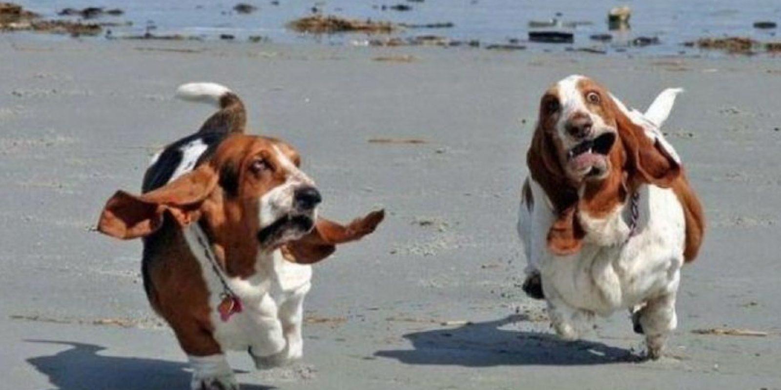 """Los dueños de mascotas también fueron calificados de acuerdo con el Anexo Lexington para Mascotas Escala, que mide afecto por los animales domésticos y un cuestionario adjunto que mide el """"apego ansioso"""" y el """"apego evitativo"""" Foto:Tumblr.com/Tagged-mascotas-graciosas"""