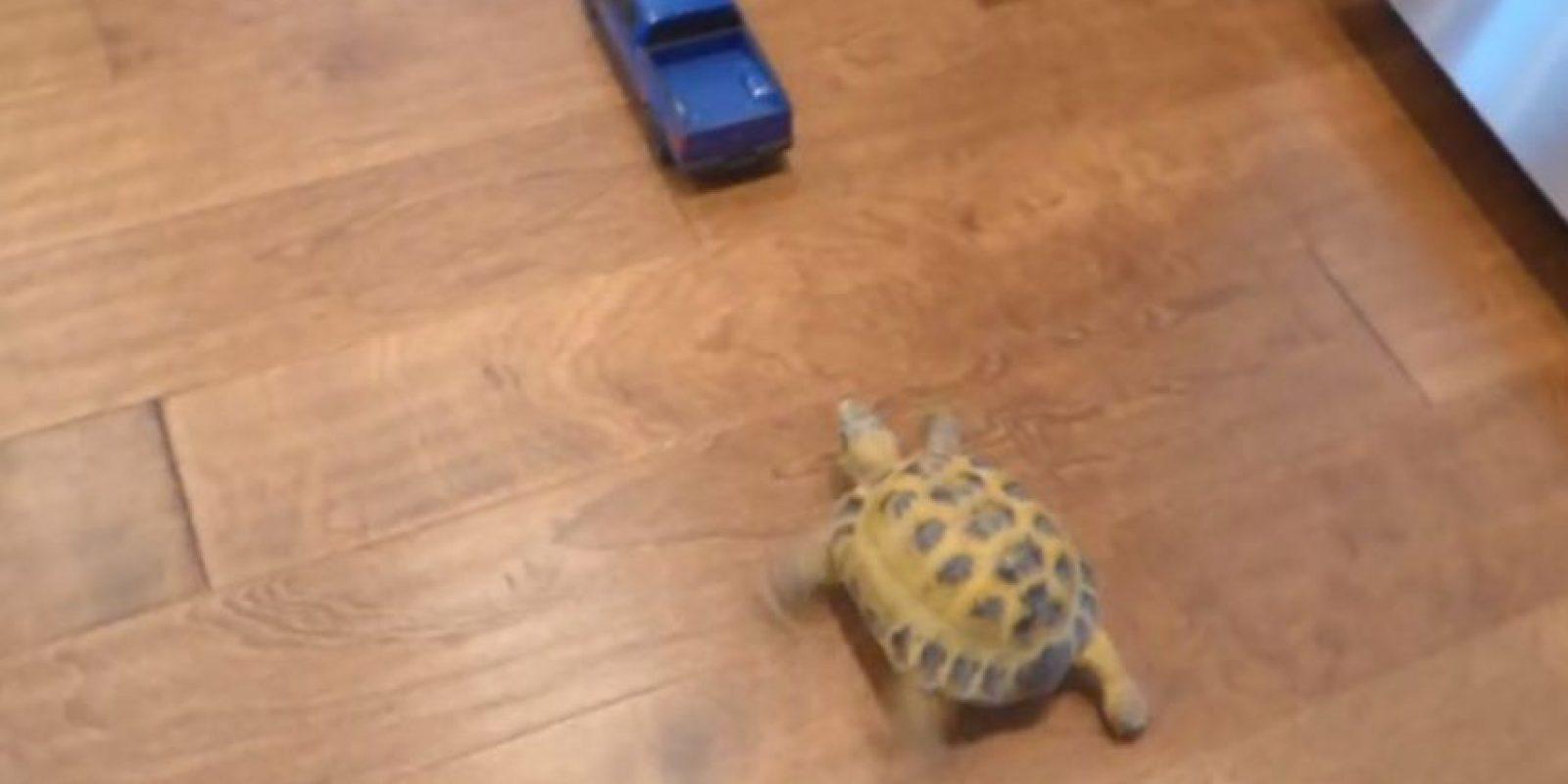 """¡Rápida y furiosa! Esta tortuga se hizo famosa por perseguir un auto a """"gran"""" velocidad. Foto:YouTube"""