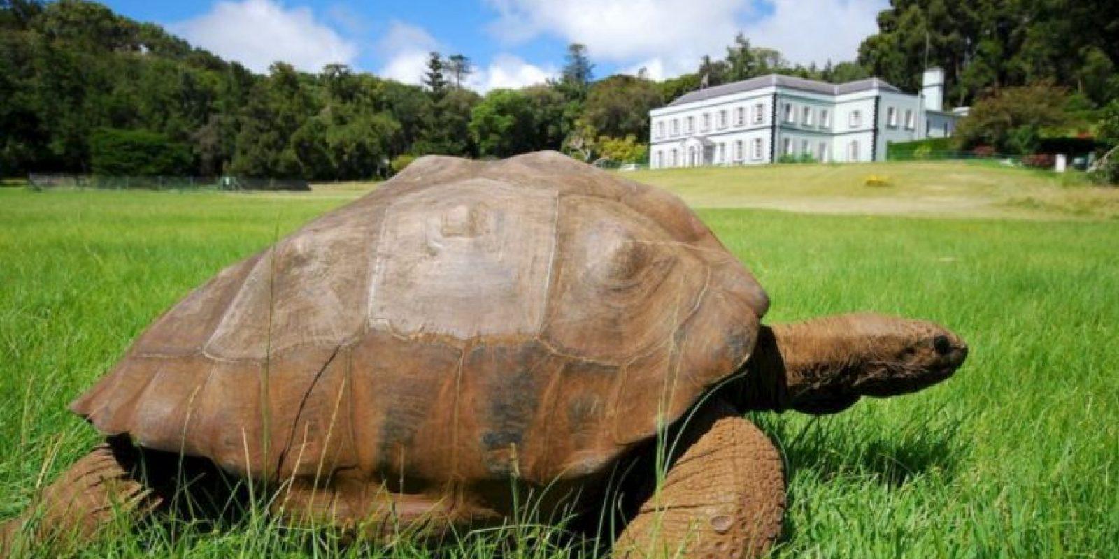 En 2014, Jonathan cumplió 182 años respirando en la Tierra. Se cree que puede ser el animal más viejo vivo en nuestro planeta. Foto:www.tripadvisor.com