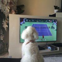 A la mascota de los Djokovic también le gusta el tenis. Foto:JelenaRisticNDF