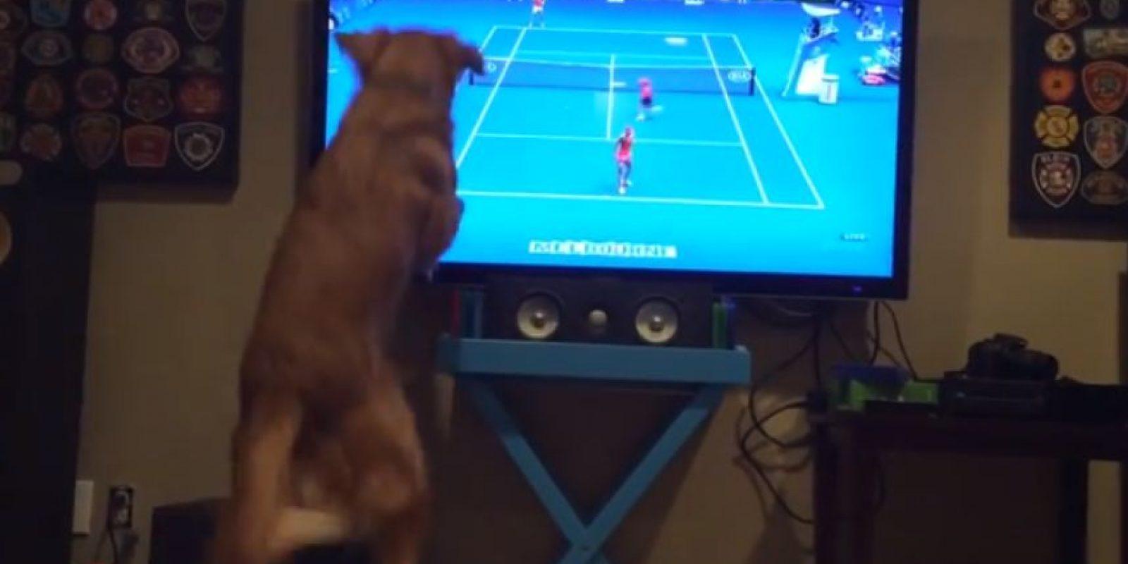 Georges no deja de saltar cuando ve el deporte blanco en la televisión Foto:Youtube: Bearaids