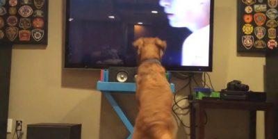 VIDEO: Perro amante del tenis se divierte con el Abierto de Australia