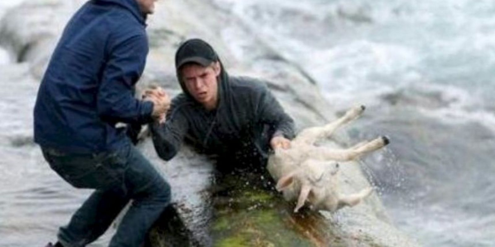 Dos noruegos rescatan a una cabra. Foto:Tumblr